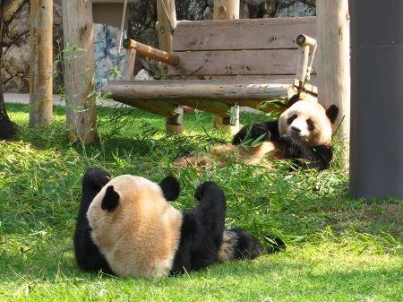 20101004_ふたごのパンダ2歳2