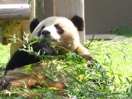 20101004_ふたごのパンダ2歳3