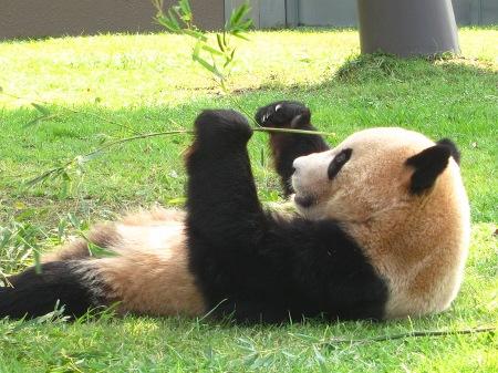 20101004_ふたごのパンダ2歳4