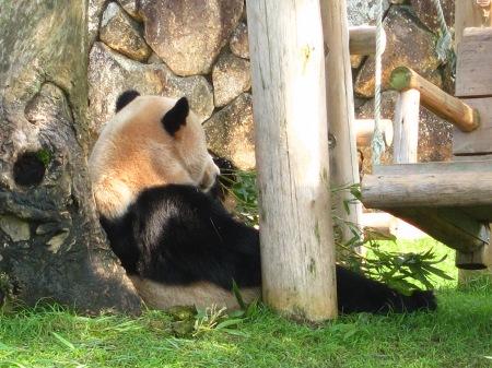 20101004_ふたごのパンダ2歳5