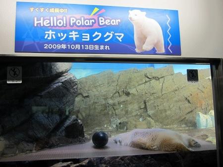 20101004_白クマの子供2