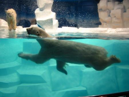 20101004_白クマの親1