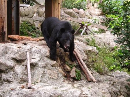 20101010_安佐動物公園15-ツキノワグマ