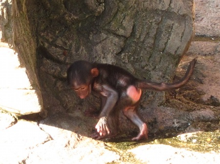 20101010_安佐動物公園6-赤ちゃん