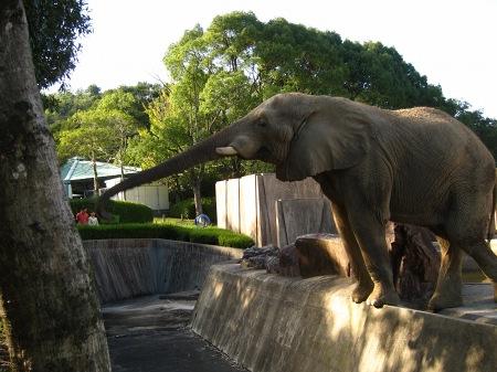 20101010_安佐動物公園8-ゾウ