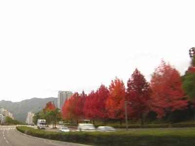 20101110_真っ赤な樹-s45