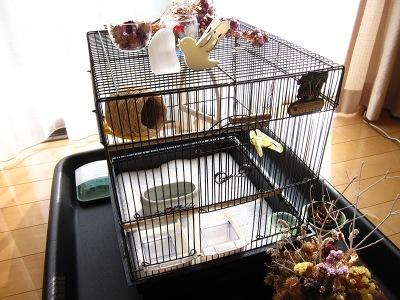 20101114_鳥かご