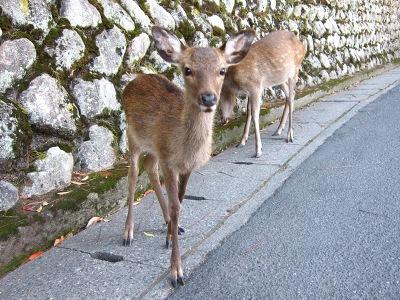 20101017_宮島11