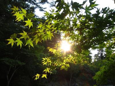 20101017_宮島18