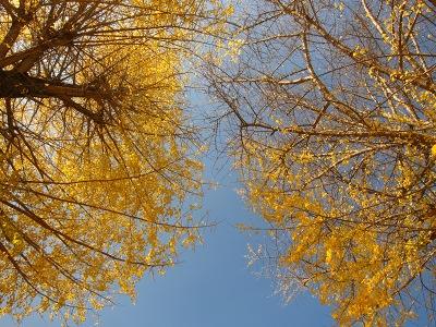 20101121_客人神社5