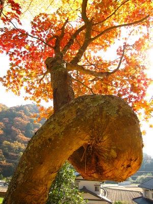 20101121_客人神社9