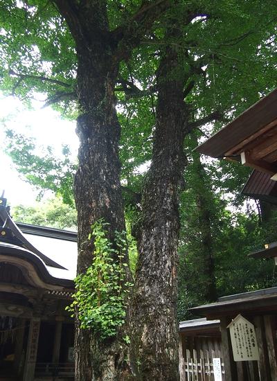 250818 天岩戸神社9