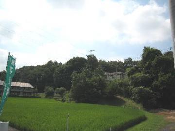 この山の中にブルーベリー畑があります