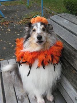 かぼちゃなルーク