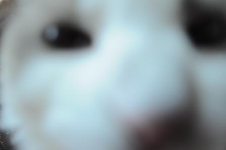 rinas camera 038