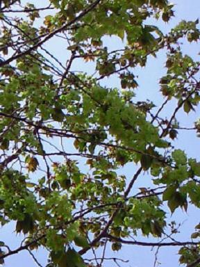 豆腐&緑桜 005