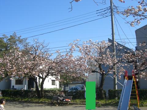 緑桜 011