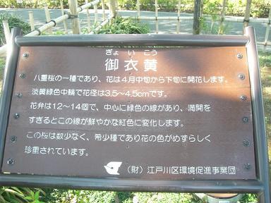 緑桜 005