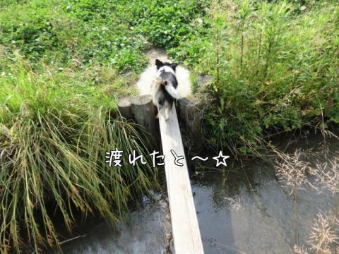 9N1DV.jpg