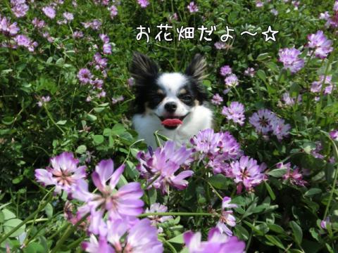 S1js_.jpg