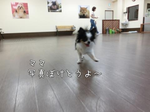 Y_zLG.jpg