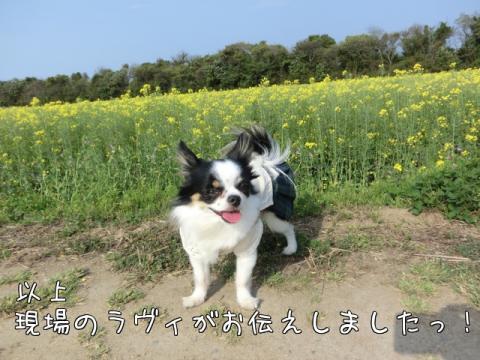 n_zCr.jpg