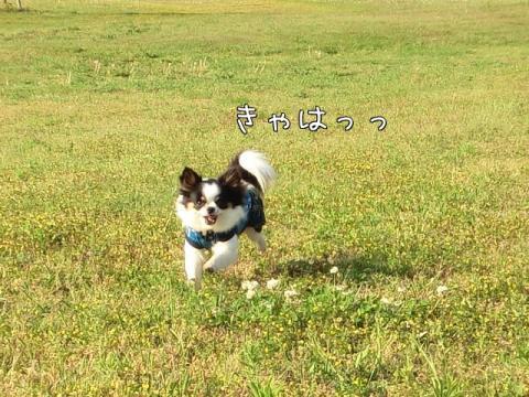 trQ_8.jpg