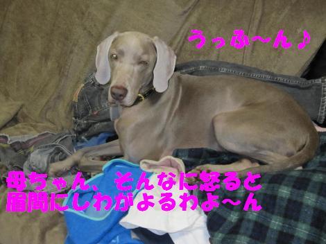 2010208+012_convert_20100208230500.jpg