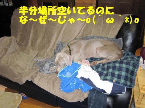 2010208+013_convert_20100208230540.jpg