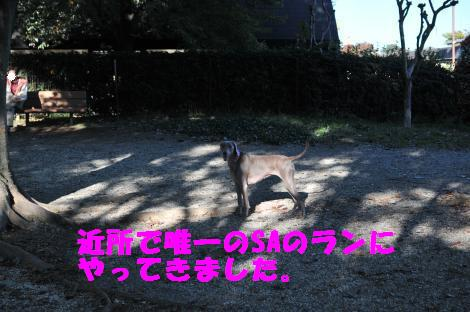 DSC_3924_convert_20101104101009.jpg