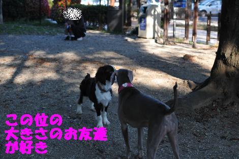 DSC_3925_convert_20101104100743.jpg