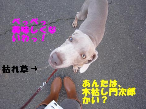 IMG_1140_convert_20100303192426.jpg