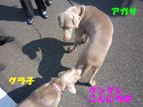 IMG_1650_convert_20100502214946.jpg