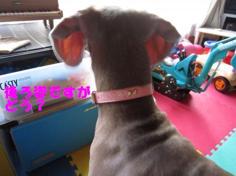 IMG_1709_convert_20100507232558.jpg
