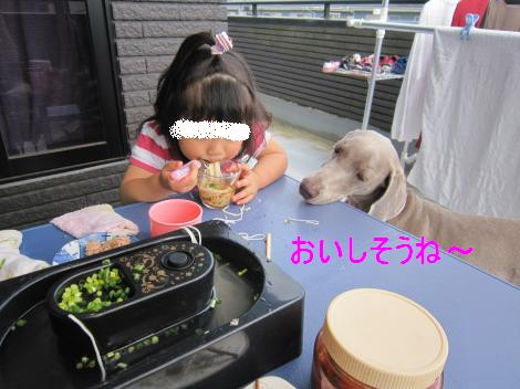 IMG_2209_convert_20100607110120.jpg
