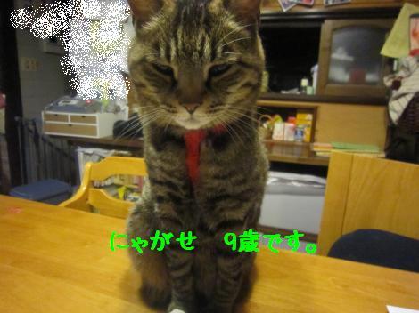 IMG_2404_convert_20100706223703.jpg