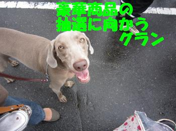 IMG_2666_convert_20100627210202.jpg