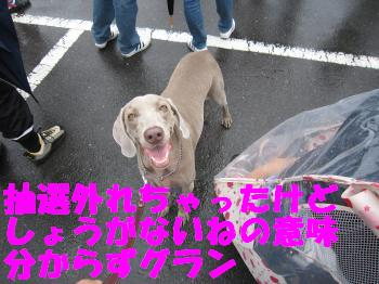 IMG_2670_convert_20100627210313.jpg