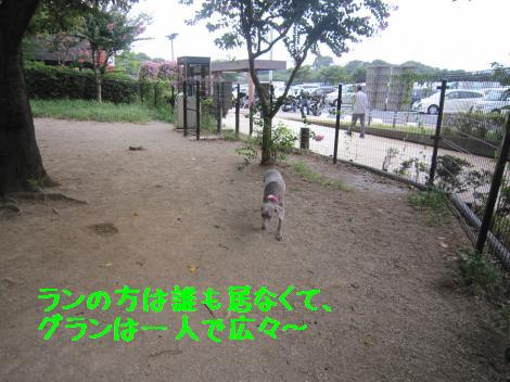 IMG_3780_convert_20100815160137.jpg