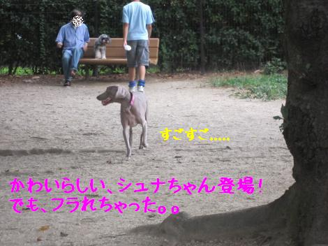 IMG_3782_convert_20100815160249.jpg