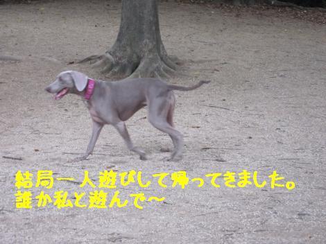 IMG_3783_convert_20100815160230.jpg