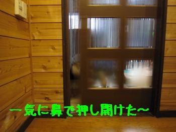 IMG_4013_convert_20100826071131.jpg