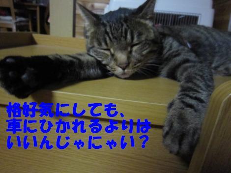 IMG_4049_convert_20100827095948.jpg