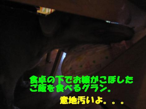 IMG_4122_convert_20100902103603.jpg