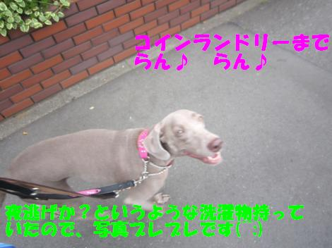 IMG_4405_convert_20100913101148.jpg