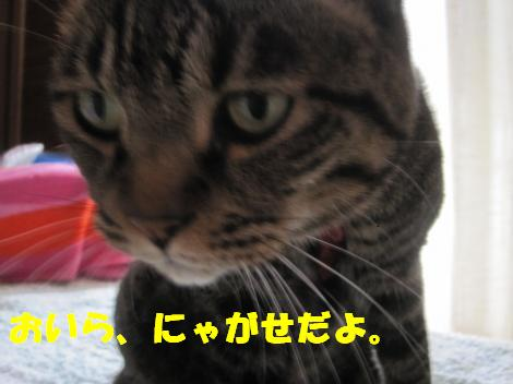 IMG_4527_convert_20100920124235-1.jpg