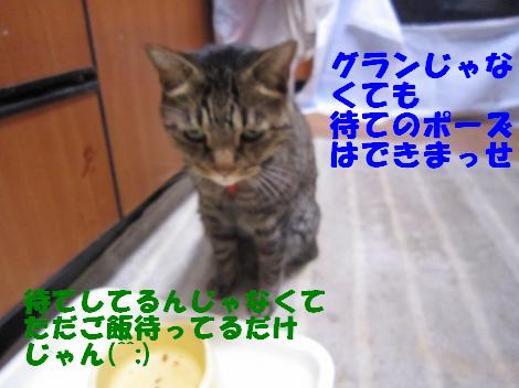 IMG_4545_convert_20100920124351-1.jpg