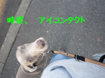 IMG_4663_convert_20100925235553.jpg