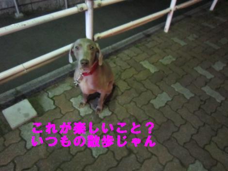 IMG_4923_convert_20101006133656.jpg