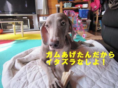 IMG_4944_convert_20101007124228.jpg